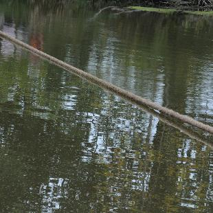 The rope stretched across the Black River during the Pull.