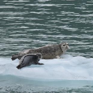 Photo Credit: Sea Wolf Adventures