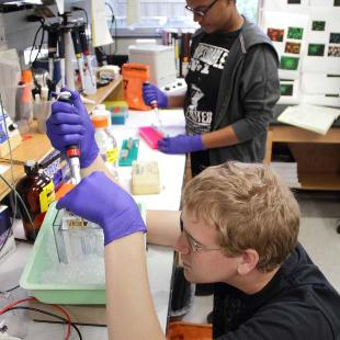 Students conduct research in VanderWerf Hall