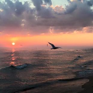 A seagull flying over the Lake Michigan shore as the sun sets