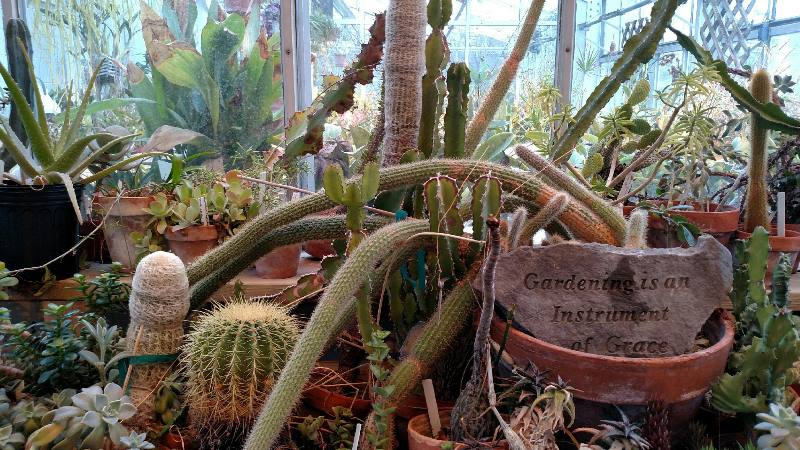 Cacti in the greenhouse